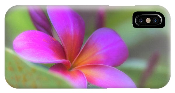 Pink Peekaboo Plumeria IPhone Case