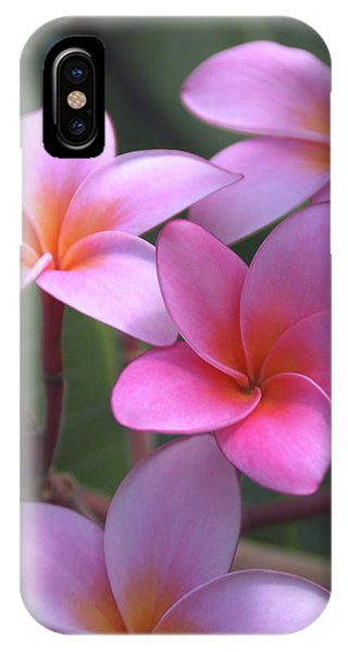 Oahu Hawaii iPhone Case - Pink Plumeria by Brian Harig