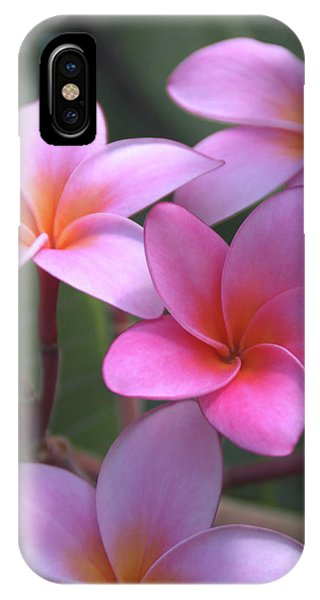 Oahu iPhone Case - Pink Plumeria by Brian Harig