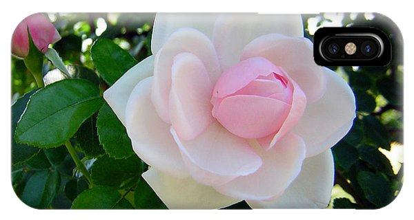 Pink Rose 2 IPhone Case