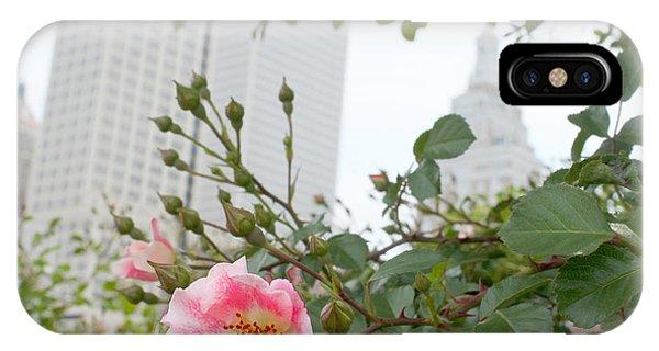 Pink Rose Of Tulsa IPhone Case