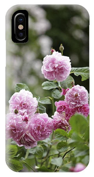 Rosebush iPhone Case - Pink Roses With Foliage Background by Gillham Studios