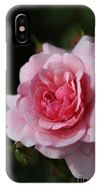 Pink Shades Of Rose IPhone Case