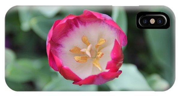Pink Tulip Top View IPhone Case