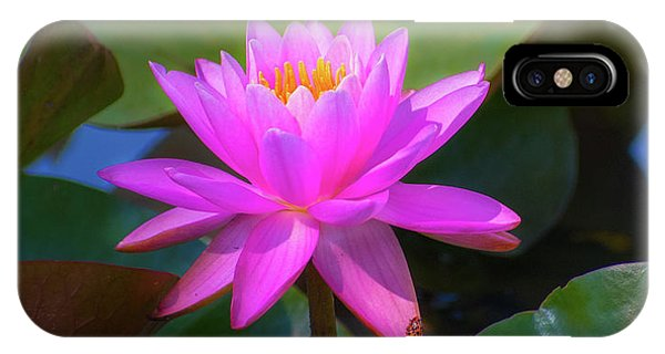 Pink Water Lilly And Ladybugs IPhone Case