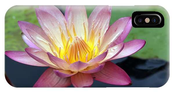 Pink Water Lily IPhone Case