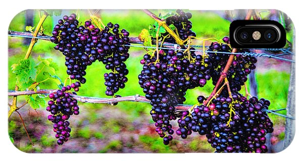 Pinot Noir Grapes IPhone Case