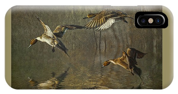Pintail Ducks IPhone Case