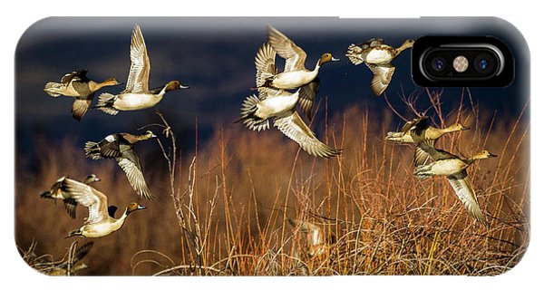 Pintails And Wigeons IPhone Case