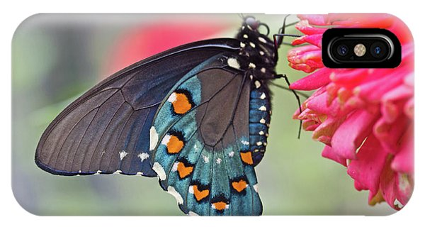 Pipevine Swallowtail Butterfly IPhone Case
