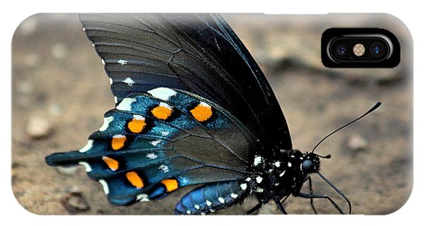 Pipevine Swallowtail Close-up IPhone Case