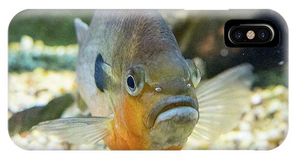 Piranha Behind Glass IPhone Case