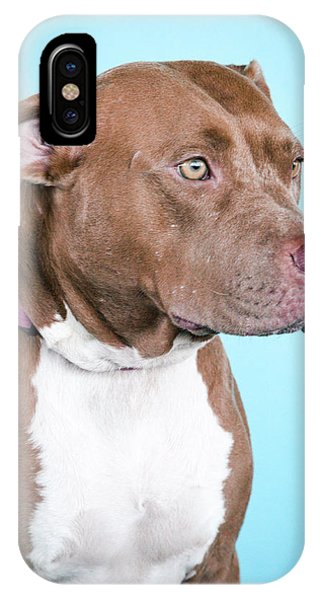 Pitbull iPhone Case - Pistol 1 by Pit Bull Headshots by Headshots Melrose