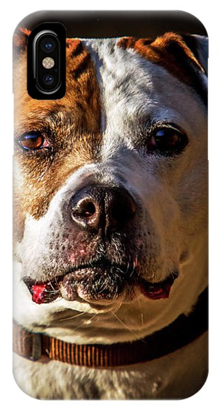 Pitbull Rescue Poster IPhone Case