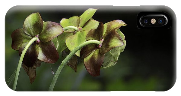 Pitcher Plant 11 IPhone Case