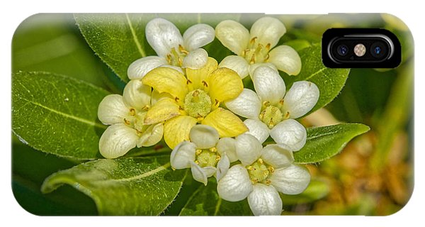 Pittosporum Flowers IPhone Case