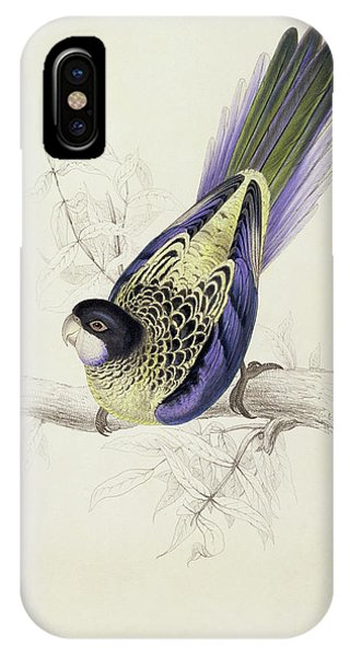 Platycercus Brownii, Or Browns Parakeet IPhone Case