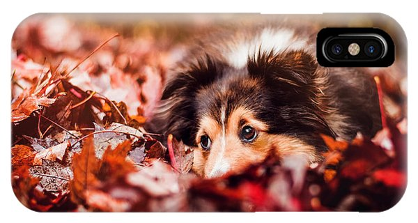 Autumn iPhone Case - Playful Autumn Dog by Fbmovercrafts