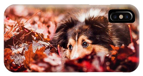 Autumn iPhone X Case - Playful Autumn Dog by Fbmovercrafts