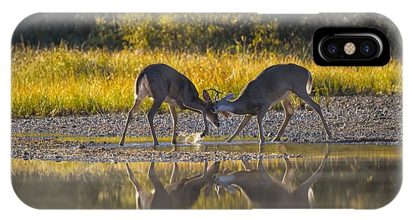 White Tailed Deer iPhone Case - Playful Young Bucks by Mark Kiver