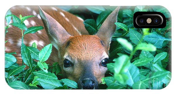 White Tailed Deer iPhone Case - Playing Peekaboo by Sandra Bronstein