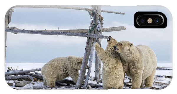 Playtime In The Arctic IPhone Case