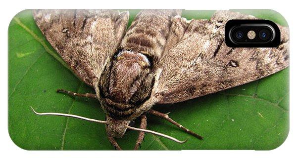 Plebeian Sphinx Moth IPhone Case
