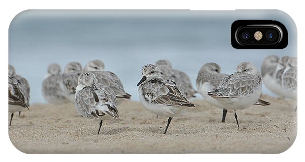 Plover Colony IPhone Case