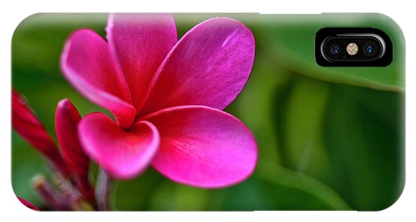 Plumeria - Royal Hawaiian IPhone Case