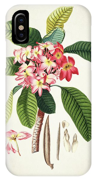 Botanical iPhone Case - Plumeria Botanical Print by Aged Pixel