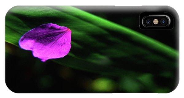Plumeria Flower Petal On Plumeria Leaf- Kauai- Hawaii IPhone Case