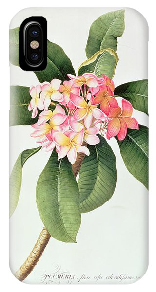 Botanical iPhone Case - Plumeria by Georg Dionysius Ehret