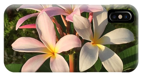 Plumeria Heaven IPhone Case