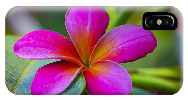 Plumeria On Leaf IPhone Case