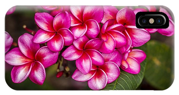 Plumeria Profusion IPhone Case