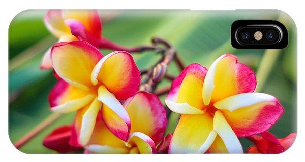 iPhone Case - Plumeria Rainbow by Jared Shomo