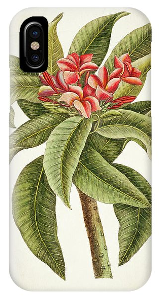 Botanical iPhone Case - Plumeria Rubra Botanical Print by Aged Pixel