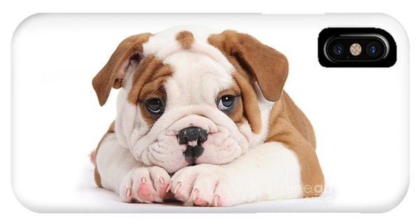 Po-faced Bulldog IPhone Case