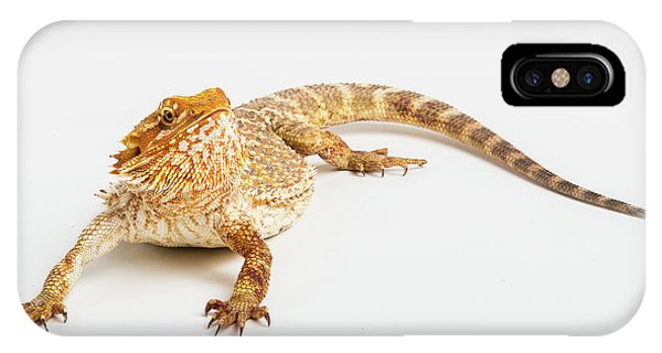 Pogona Isolated IPhone Case
