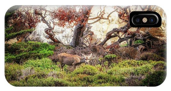 Point Lobos - Eden IPhone Case
