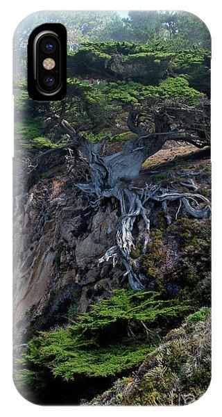 Cypress iPhone Case - Point Lobos Veteran Cypress Tree by Charlene Mitchell