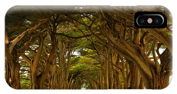Point Reyes Cypress Tunnel IPhone Case