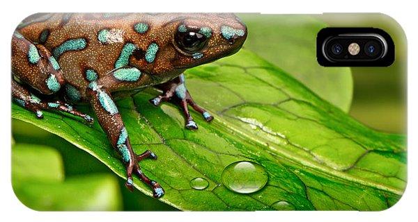 poison art frog Panama IPhone Case