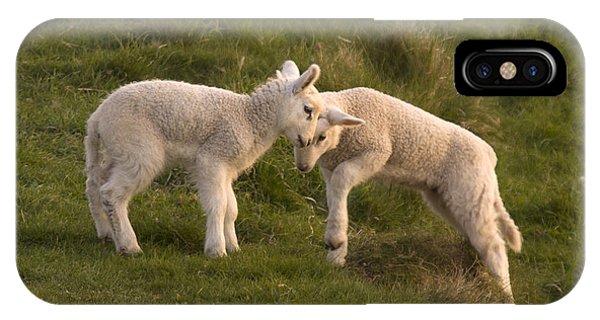 Sheep iPhone X / XS Case - Poke by Angel Ciesniarska
