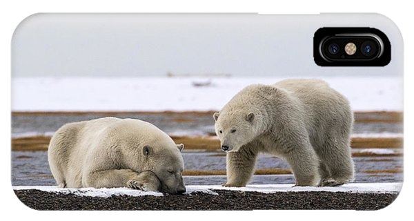 Polar Bear Zzzzzzz's IPhone Case