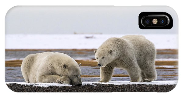 Polar Bear Zzzzzzz's IPhone Case