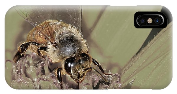 Pollinating Bee IPhone Case