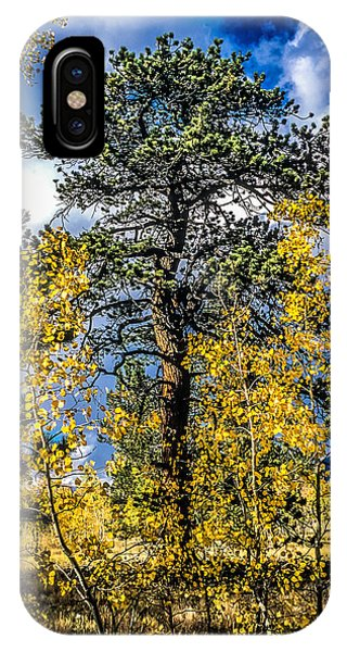 Ponderosa  Tree In The Aspens Of Fall Colorado IPhone Case