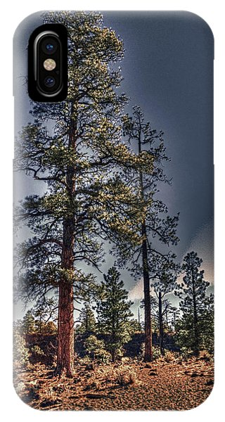Ponderosa Pines At The Bonito Lava Flow IPhone Case