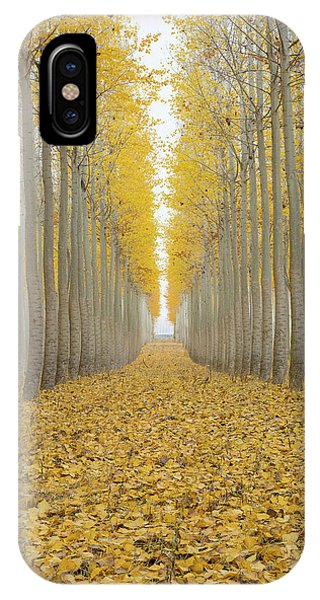 Poplar Tree Farm One Foggy Morning In Fall Season IPhone Case